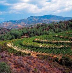 Holidays in #Miliou #Paphos #Cyprus