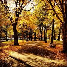 Photo by @_luppino_ #commave #fall #boston www.instagram.com/visitboston