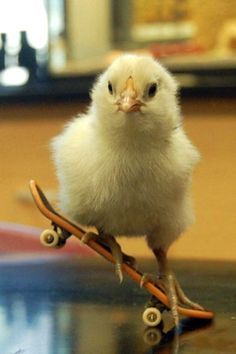 Look how cute chicks are, and talented too. Why would anyone want to throw him in the trash??it happens.