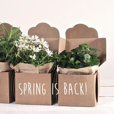 Cardboard & plants! Perfect match for spring! Visit us: www.selfpackaging.com // #diy #handmade #giftboxes #hellospring #cardboard #design
