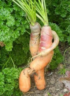 ugly vegetables - Twitter Search