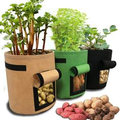 Vegetable Planters, Tomato Vegetable, Small Vegetable Gardens, Small Gardens, Apartment Vegetable Garden, Apartment Gardening, Vegetable Garden Design, Greenhouse Vegetables, Container Plants