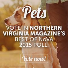 Who is your go-to for all of your pet's needs? | Let us know and cast your vote in our Best of NoVA polls today! | Link in profile #Pets #PetSitter #PetKennel #PetGroomer #PetTrainer #DogWalker #PetBoutique #DogPark #DogDaycare #Veterinarian