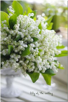 ❧ Lily of the valley - Muguet ❧ All Flowers, Fresh Flowers, Spring Flowers, White Flowers, Beautiful Flowers, Wedding Flowers, Garden Shrubs, Lily Of The Valley, Trees To Plant