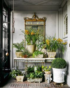 #plantsgalore