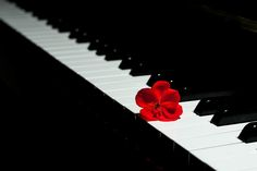 Untitled - Flower and piano