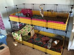 Ultimate guinea pig cage. Chris Dunn make this! Please
