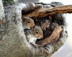 Two Baby Squirrels by crazysanman, via Flickr