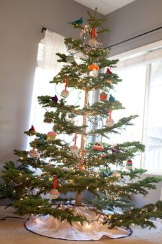 Tabletop tree. Great way to bring this beautiful tree to more ...