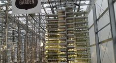 World's Largest Indoor Vertical Farm – Producing 2 Million Pounds Of Food