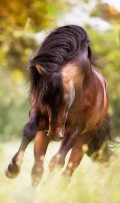 Horse running through the tall grass mane flying ♥