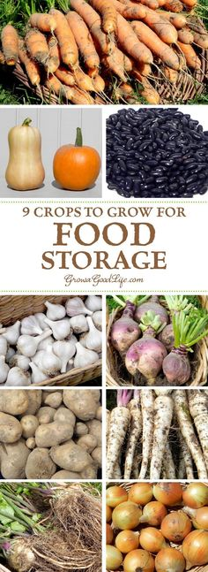 If you have an area in your basement that stays cool all winter long, you can make use of these cold spots to keep storage crops fresh well into winter. Try experimenting with growing some of these keeper crops for winter food storage. Winter Vegetables, Growing Vegetables, Fruits And Vegetables, Veggies, Growing Tomatoes, Growing Onions, Growing Lettuce, Winter Plants, Winter Garden