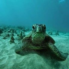 Makena Turtle Town | Maui Hawaii