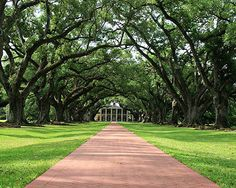 Louisiana Oak Alley Plantation 8x10 Photograph by Briole on Etsy, $30.00