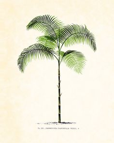 Vintage French Palm Tree No. 1 Giclee Art Print by BelleArtPrints