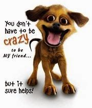 you dont have to be crazy to be my friend funny quotes quote lol friendship quotes funny quote funny quotes humor Funny Friend Pictures, Dog Pictures, Funny Photos, Crazy Pictures, Beautiful Pictures, Desktop Wallpaper Free Download, Wtf Funny, Funny Dogs, Crazy Funny
