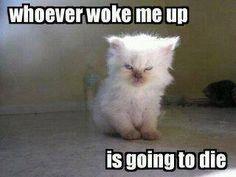 Whoever woke me up