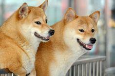 A faithful friend -Dog