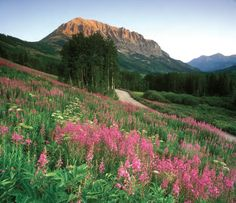 Crested Butte Colorado | Crested-Butte-Wildflowers-JC-Leacock