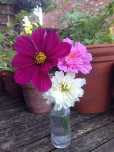 Today's desk posy, Sept 2nd 2014. Lovely Cosmos.
