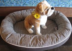 These delightful donut beds can be completely customized. You can choose your pup's favorite fabric for the bottom border, inside lining, and even the piping to make sure your best friend's new bed matches your interior design!