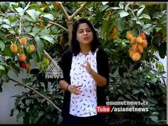 Success story in Rambutan farming at Chalakudy | Money Time 10 jun 2017