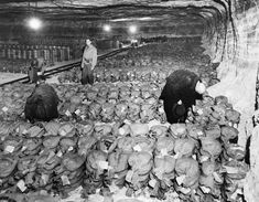 The Real Monuments Men discovered 100 tons of gold bullion, the entire German reserve hidden in a salt mine. This was a crushing blow to Hitler. #GoldBullion