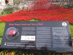 Blood Swept Lands and Seas of Red August 2014 August 2014, Seas, Landing, 30th, Poppies, Blood, Poppy, Poppy Flowers