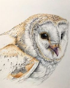 Color Pencil Drawing Ideas More owl Owl Drawing Color, Bird Pencil Drawing, Color Pencil Art, Bird Drawings, Animal Drawings, Painting & Drawing, Colored Pencil Drawings, Drawing Birds, Bird Artwork