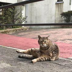 メディアツイート: 今日の猫。ー 外猫写真で呟きます ー(@kyonoSatoru)さん | Twitter
