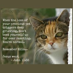 grieving cat pictures - Google Search