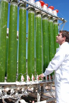 Algae can be grown and turned into biofuel - an ethanol that can power homes and cars.