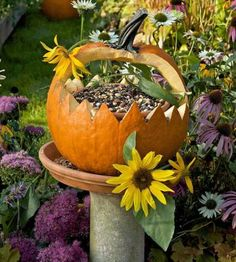 Turn bird bath into a beautiful birdseed feeder by hollowing out a pumpkin and filling it with birdseeds and sunflower seeds. This can be for birds and squirrels. The birds and squirrels will LOVE IT. The enjoy watching the birds and squirrels eat. Pumpkin Uses, Autumn Garden, Gardening, Plantation, Fall Harvest, Autumn Fall, Fall Crafts, Fall Halloween, Halloween Pumpkins