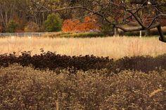 How quaint! Dry Garden, Garden Art, Cool Landscapes, Beautiful Landscapes, Plant Design, Garden Design, Landscape Architecture, Landscape Design, Prairie Planting
