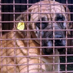 Calling for an end to South Korea's Dog…