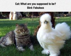 The Fluffiest Bird #lol #haha #funny