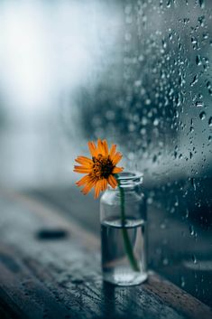 Stunning raindrops and the flower by Sarvesh Chaudhari Rainy Day Photography, Rain Photography, Creative Photography, Flower Backgrounds, Flower Wallpaper, Nature Wallpaper, Most Beautiful Flower Pictures, Cool Pictures For Wallpaper, Rain Pictures
