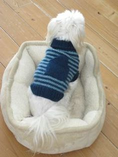 @Madelyn Davies Davies Davies Retana this for Maggie but without the pocket...FREE PATTERN