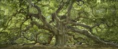 Saw this is a catalog this weekend - immediately thought of my supervisor!  Her son just got engaged by this very tree last week!
