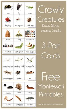 Gardens and spring means bugs! This is the perfect time to study creepy crawly things with this FREE Crawly Creatures 3 part Cards. It began as just bugs, Montessori Toddler, Montessori Preschool, Montessori Education, Free Preschool, Montessori Materials, Preschool Printables, Preschool Activities, Insect Activities, Tot School