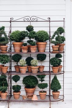 A luscious and full residential garden in Bowral that's only four years old! 50 Easy English Garden Ideas You Can Build Yourself To Complement Your Backyard Topiary Garden, Garden Pots, Topiary Plants, Garden Renovation Ideas, Jenny Rose, Flower Stands, The Design Files, Simple Flowers, Terracotta Pots