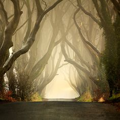 Ireland ~ this is an avenue of ancient Beech trees called the Dark Hedges, in Antirm, Ireland. They are as beautiful in the prime of spring as they are ominous & mysterious when their leaves have fallen  ... and, depending upon the quality of light, the ambience of the road becomes either like entering a fairytale or taking the road to doom!