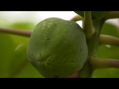 Food fight over GMOs - YouTube