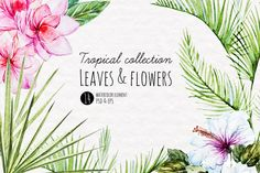 Watercolor Tropical Elements by Anastasia Lembrik on Creative Market