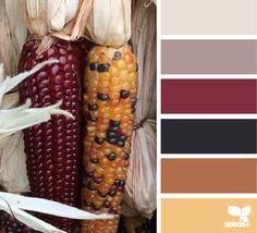 Color Corn - http://design-seeds.com/index.php/home/entry/color-corn1