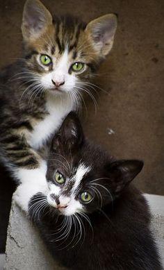 double trouble kittens