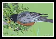 Robin Photograph by Allison Murray Robin Pictures, Photograph, Framed Prints, Art, Photography, Art Background, Kunst, Photographs, Performing Arts