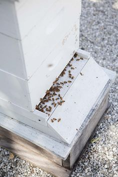 Beehive on top of Family Garden