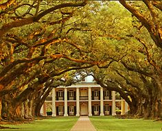 Oak lined plantation