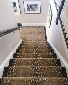 Best Patterned Carpet For The Staircase Love Patterned 640 x 480